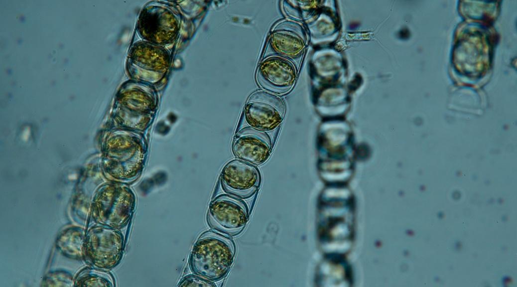 diatom07 b